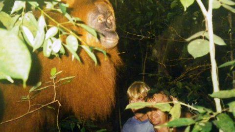 Jungletrek i Indonesien – orangutanger og meget mere