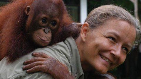 At bo med orangutangerne