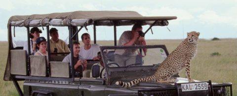 Tøj og udstyr til din safari