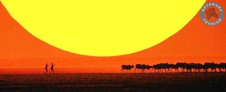 Bushmænd i Botswana