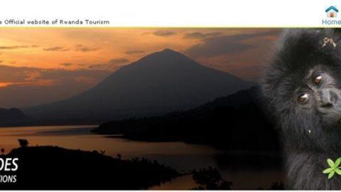 Mød en bjerggorilla i Rwanda – en uforglemmelig oplevelse