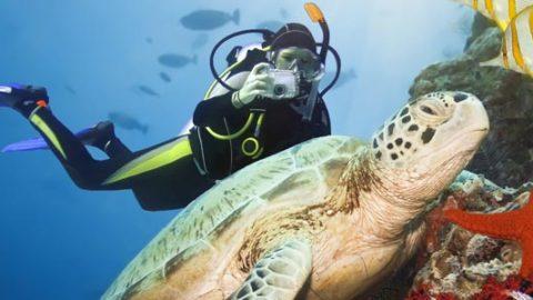 Dykning på Zanzibar