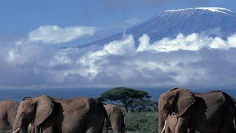 Kilimanjaro 5.895 meter