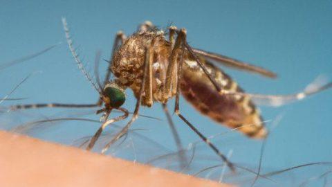 Myggespray – Hvordan undgås myggestik? Er DEET farligt?