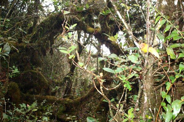 Vandring i mosskoven - Mossy Forest