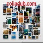 Profilbillede af colin dub